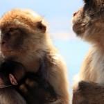 monkeys-640x426