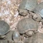 Turtles-640x380